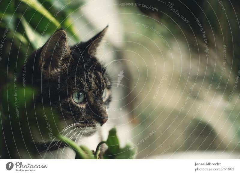 Cat Green White Animal Black Eyes Feminine Head Bird Living or residing Wait Observe Cute Curiosity Pet Mouse