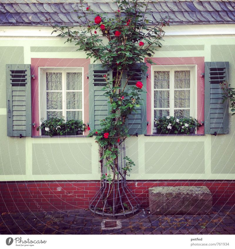 Old Beautiful Green Relaxation Red House (Residential Structure) Window Wall (building) Wall (barrier) Gray Wood Stone Pink Flat (apartment) Facade Living or residing
