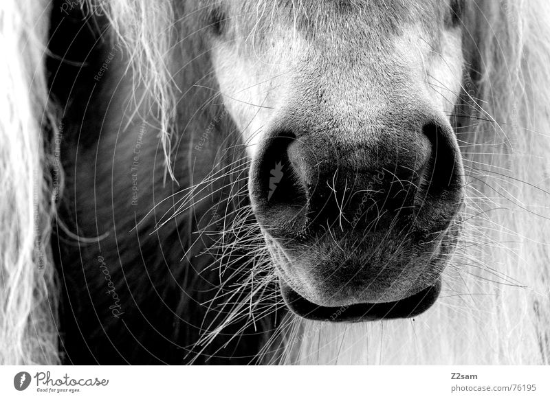 Animal Hair and hairstyles Mouth Wet Nose Horse Pelt Snout Mane Piston