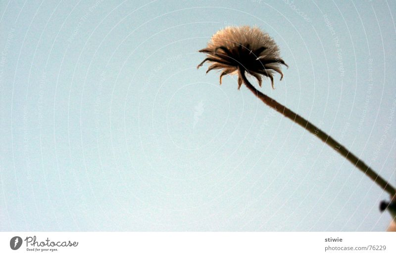 Flower Autumn Blossom Stalk Seed