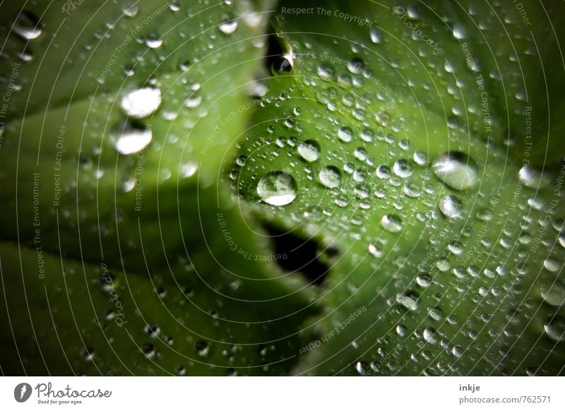 Nature Green Water Plant Summer Leaf Animal Environment Spring Natural Garden Rain Growth Fresh Wet Drops of water