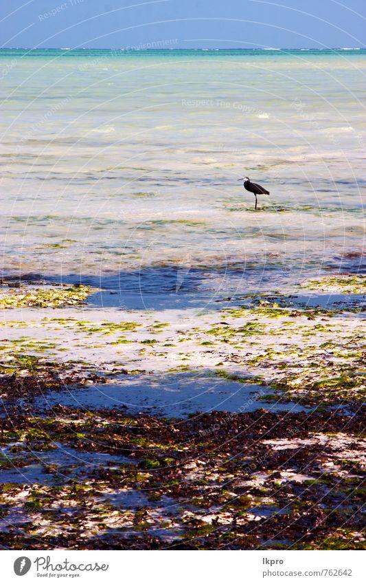 coast bird Nature Vacation & Travel Beautiful Summer Ocean Relaxation Clouds Animal Coast Freedom Bird Sand Bright Wild Dirty Waves