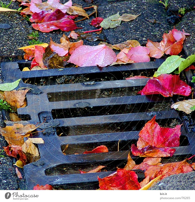 how deep can you actually fall? Effluent Downward Gully Autumn Leaf Moody Rotation Tree Cobblestones Multicoloured October November Impression Month Year