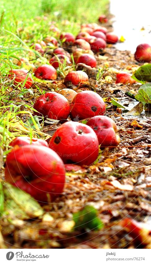 Soon mud Roadside Autumn Time Seasons Transience Putrefy Worm Grass Leaf Wet Damp Cold Red Green Mud Asphalt Meadow Nutrition Sense of taste Sweet Fruit Apple