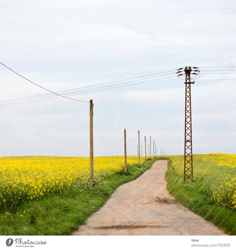 blue ride Trip Energy industry Electricity pylon Environment Nature Landscape Earth Sky Clouds Summer Grass Canola field Field Street Lanes & trails Yellow