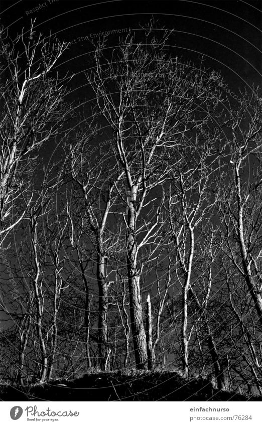 o.t. Tree Exterior shot Dark Winter Black & white photo Nature Branched Irritation