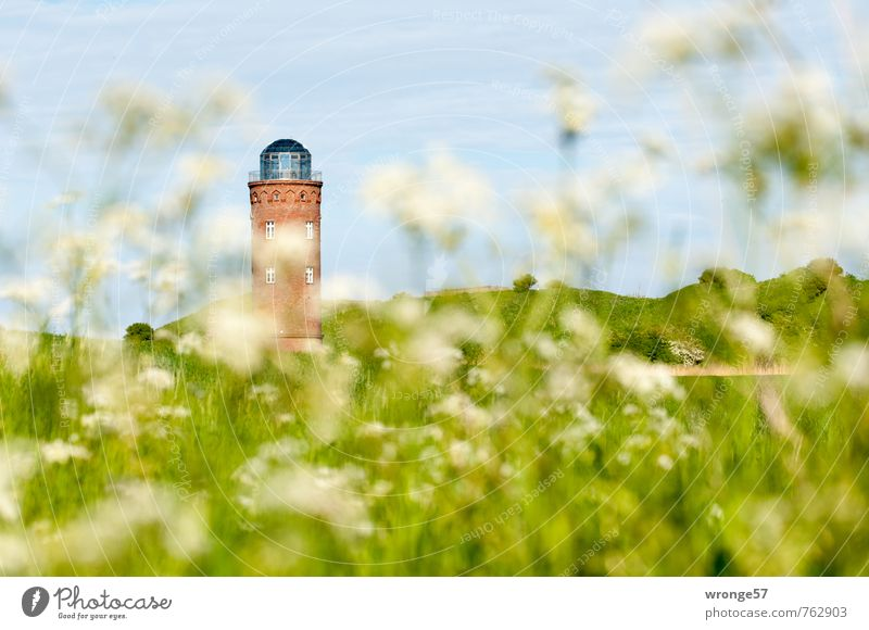 Sky Old Plant Summer Meadow Field Tower Cloudless sky Manmade structures Monument Rügen Blue sky Wild plant Atelier Lookout tower Part of the plant