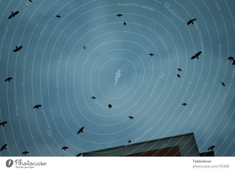 Sky Winter House (Residential Structure) Clouds Autumn Bird Flock Migratory bird
