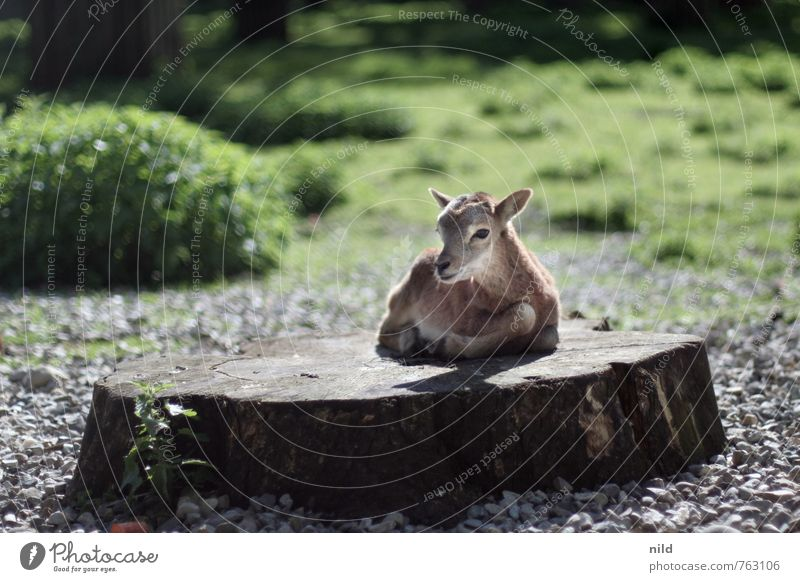 Nature Green Plant Summer Animal Environment Baby animal Spring Small Brown Wild animal Beautiful weather Observe Cute Discover Zoo