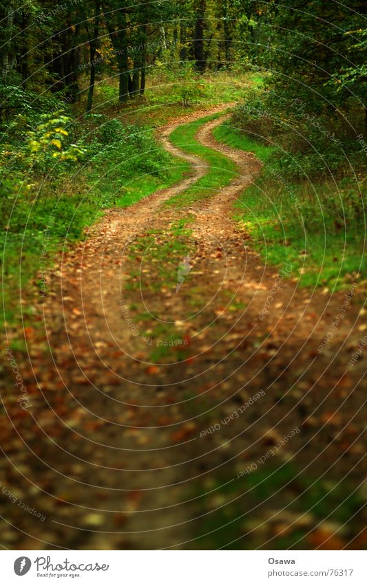 walk in the woods Forest Forest road Traffic lane Skid marks Tree Grass Leaf Autumn Nature Lanes & trails Street Curve Circle long and winding road