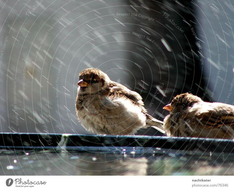 sparrow laundry Sparrow Laundry Well Exterior shot lien Water rain splash Feather