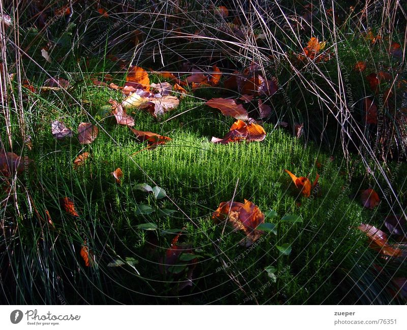 Moss with a ray of hope Colour photo Exterior shot Deserted Twilight Central perspective Garden Easter Autumn Grass Leaf Park Meadow Forest Coast Green Trust
