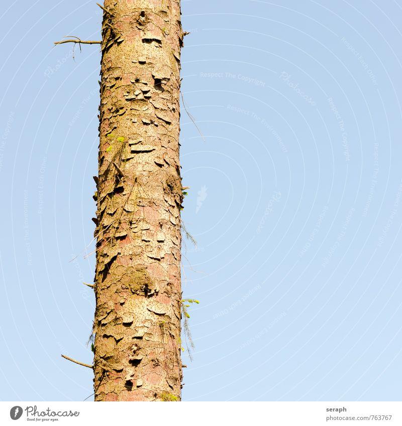 Tree trunk Forest fir Conifer Wood Plant Nature Environment Evergreen Pine stem Coniferous trees Coniferous forest Fir needle Pine needle Fir tree