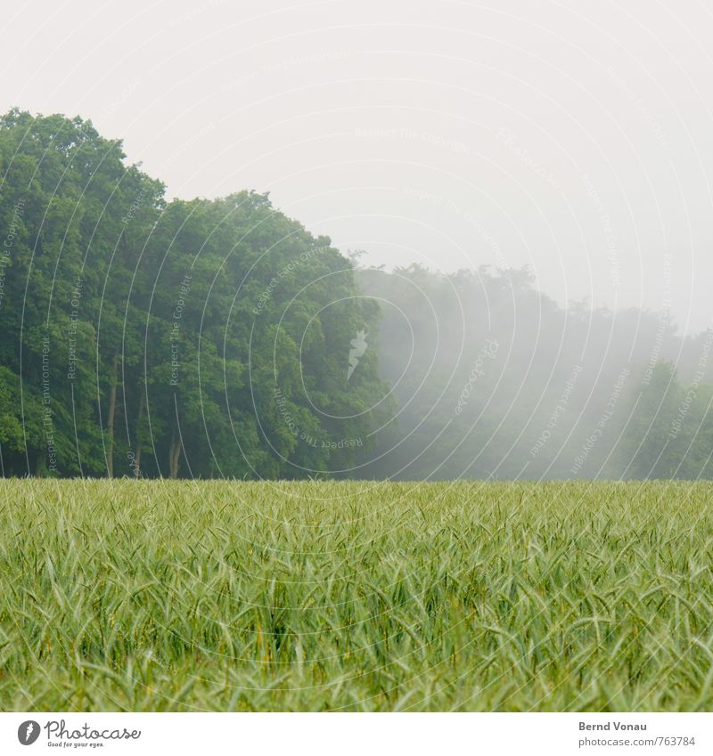 Nature Green Landscape Calm Forest Gray Food Field Fog Agriculture Grain Haze Dreary Provision