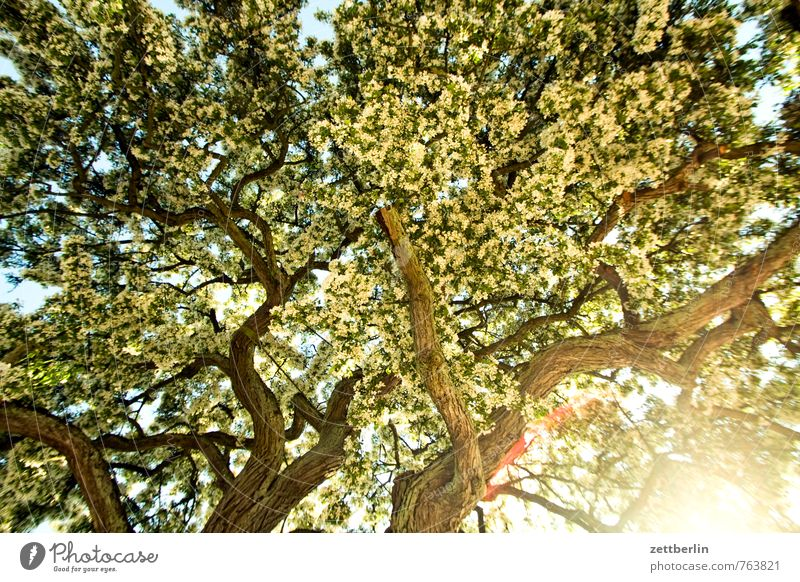 Plant Tree Blossom Bright Background picture Arrangement Growth Bushes Blossoming Branch Twig Avenue Dazzle Flashy Agitated