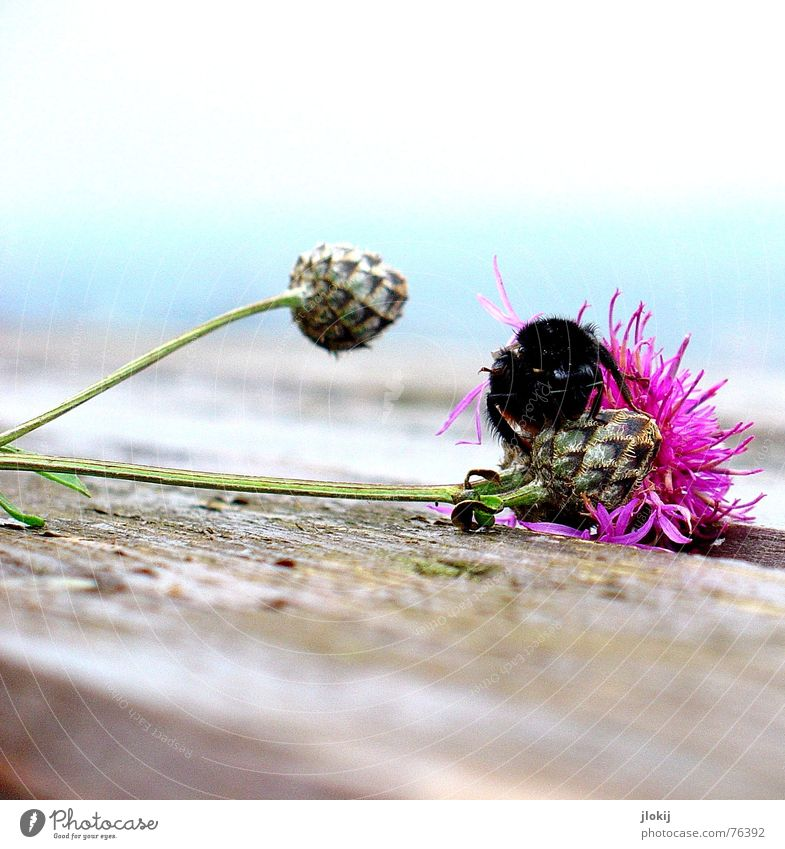 Flower Plant Animal Autumn Blossom Wood Pink Flying Table Corner Soft Wing Insect Transience Delicate Blossoming
