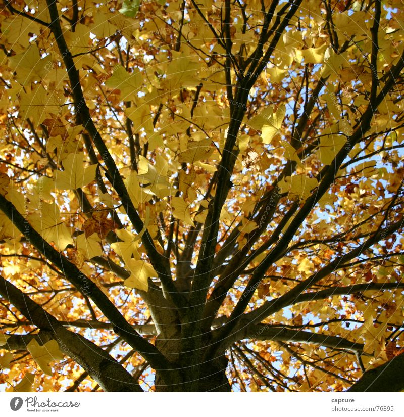 a tree says goodbye Tree Autumn Moody Seasons Exterior shot Goodbye New start Relief Yellow Brown Leaf hearty mood Tree trunk Branch