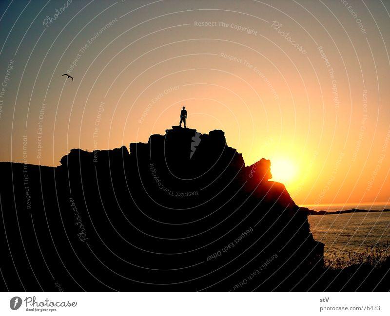 Sun Ocean Dark Grass Freedom Bright Bird Waves Rock Seagull Stony