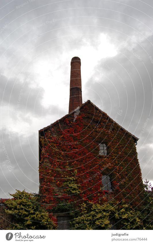 grain distillery House (Residential Structure) Building Spirits Brick Clouds Autumn Leaf Overgrown Window Village Degersen Historic Industry Chimney Old Grain