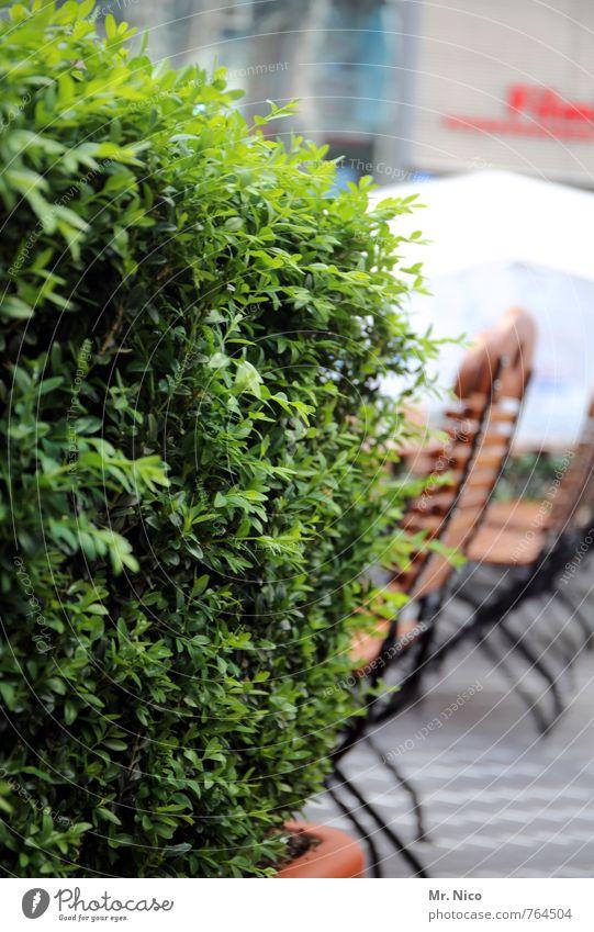 Vacation & Travel Green Plant Summer Garden Growth Decoration Bushes To enjoy Joie de vivre (Vitality) Chair Well-being Café Restaurant Marketplace