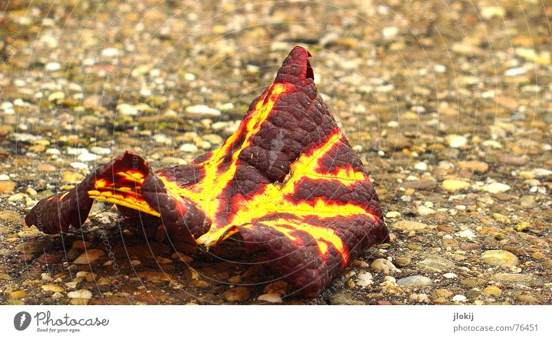 Old Red Leaf Yellow Street Autumn Lanes & trails Stone Brown Lie Arrangement Transience Vine To fall Under Sidewalk