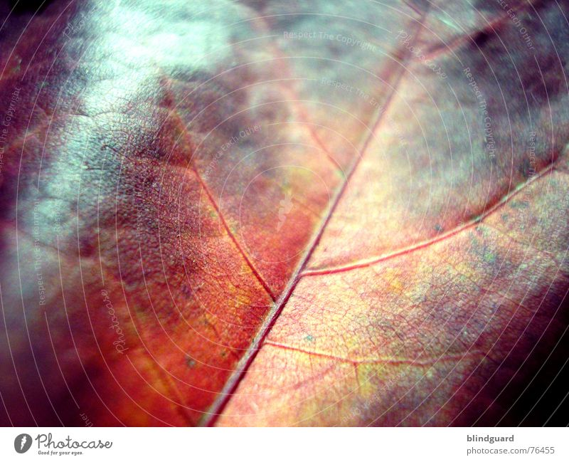 Sun Green Red Leaf Yellow Autumn Death Warmth Wind Physics Dry Hollow Fine Vessel Branchage Dried