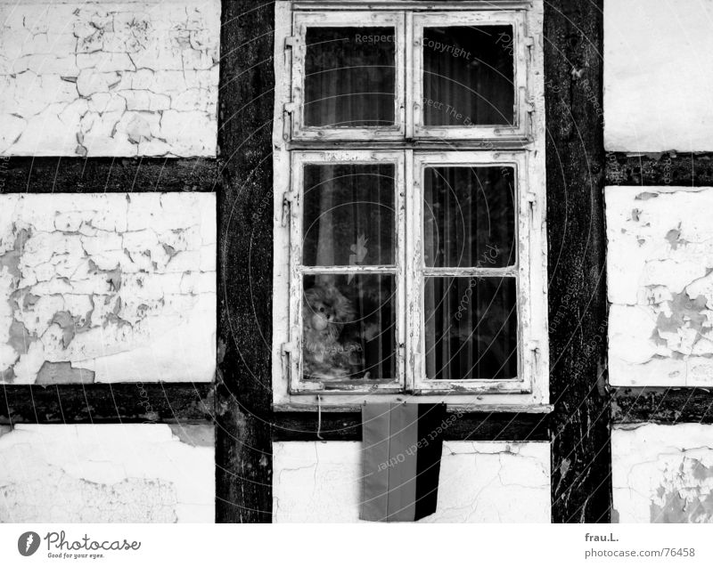 Old House (Residential Structure) Loneliness Animal Window Empty Gloomy Broken Putrefy Toys Village Things Derelict Shabby Window pane