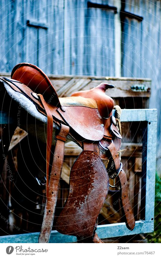 horse saddle Horse Leather Animal Barn Wood Brown Aluminium Seating Equestrian sports Sit Colour Gate Metal Saddle