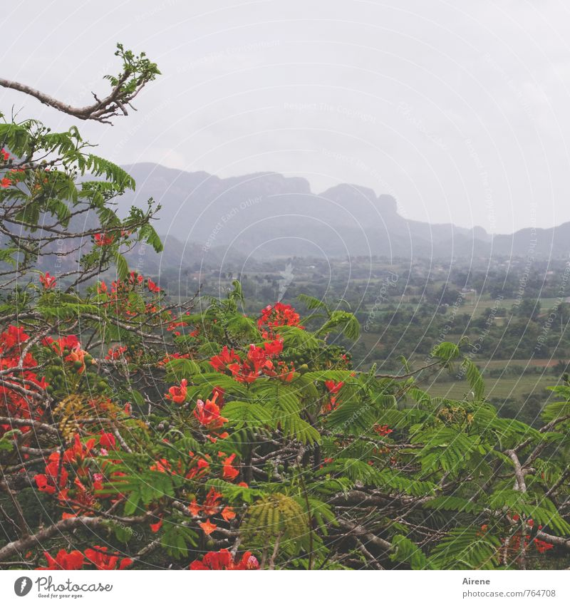 Nature Blue Green Plant Tree Red Landscape Clouds Blossom Rock Rain Fog Climate Blossoming Fragrance Exotic