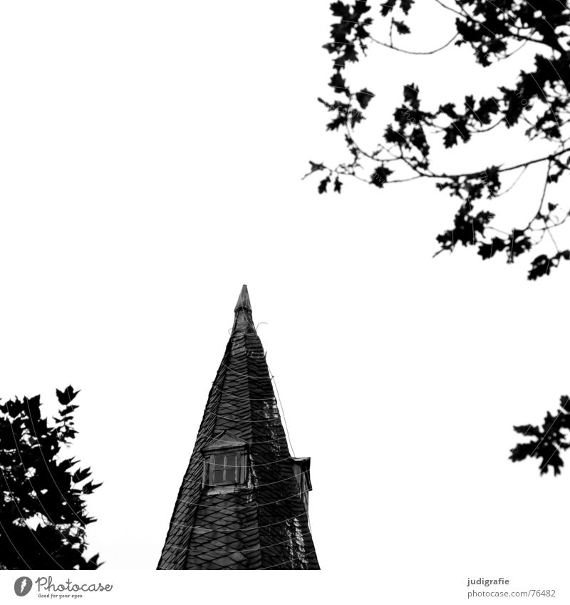 Lace with windows Church spire Window Tree Leaf Black White Oak tree Religion and faith Point Monastery wennigsen Contrast roof house Lightning rod Tilt