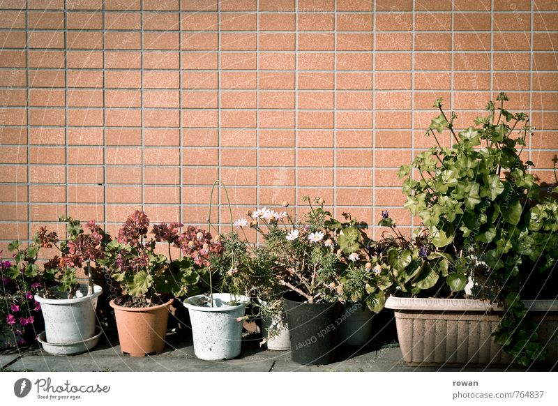 flowers Plant Flower Bushes House (Residential Structure) Manmade structures Building Wall (barrier) Wall (building) Facade Multicoloured Decoration
