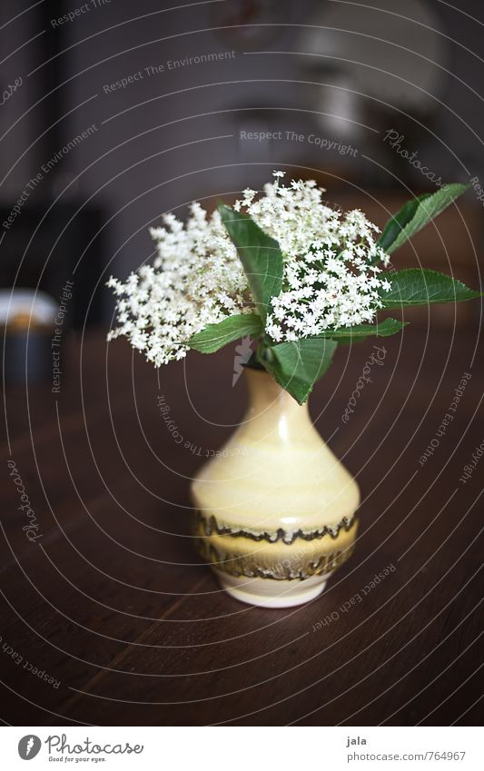 elder Table Wooden table Plant Flower Leaf Blossom Agricultural crop hounders Elder Elderflower Vase Esthetic Natural Beautiful Colour photo Interior shot