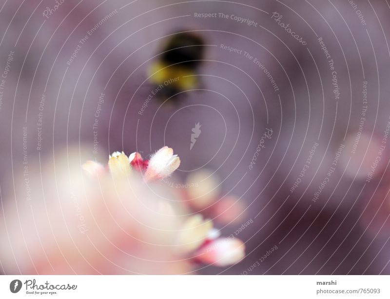 departure Nature Plant Animal Flower Bee 1 Emotions Bumble bee Airplane takeoff Blossom Shallow depth of field Fly Garden Violet Colour photo Exterior shot