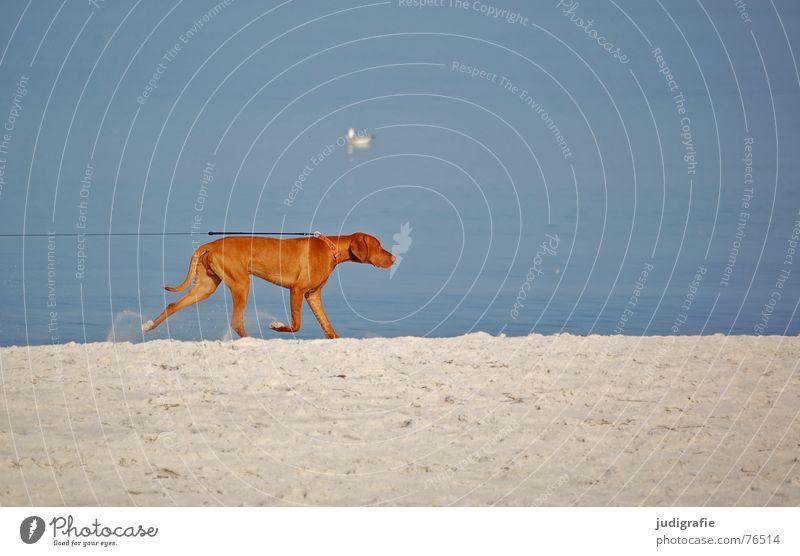 Water Beach Ocean Animal Movement Sand Dog Coast Lake Feasts & Celebrations Nose Rope Railroad Tracks Seagull Baltic Sea