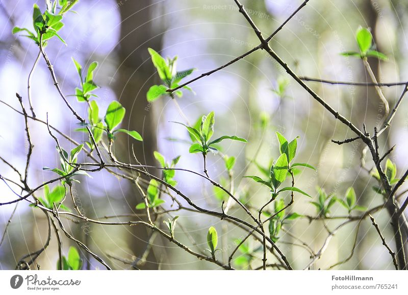 beginning of spring Nature Plant Spring Summer Beautiful weather Bushes Leaf Blossom Foliage plant Wild plant Forest Blossoming Fresh Green Energy Idyll Life