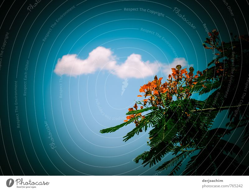 Sky Nature Blue Green White Summer Calm Clouds Style Wood Exceptional Leisure and hobbies Orange Esthetic Trip Beautiful weather