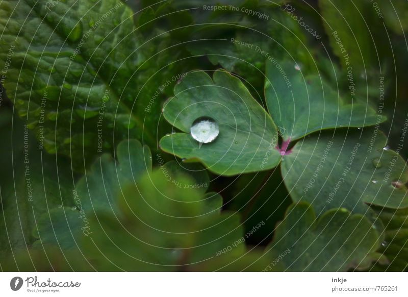 single Nature Plant Water Drops of water Spring Summer Leaf Garden Lie Esthetic Simple Fresh Near Natural Round Juicy Green Growth Surface tension Dew
