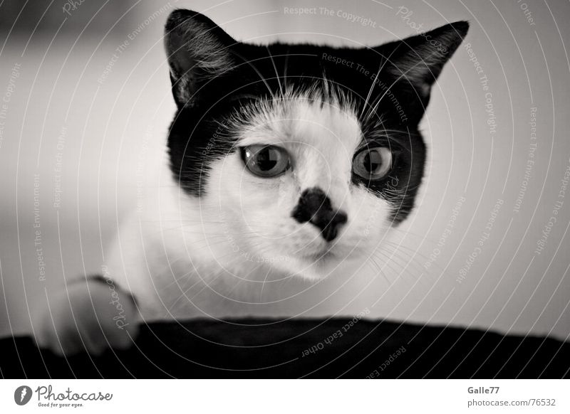 What is´n that? Cat Whisker Fix Looking Curiosity Playing Funny Paw Domestic cat fin Finnish Nose Eyes