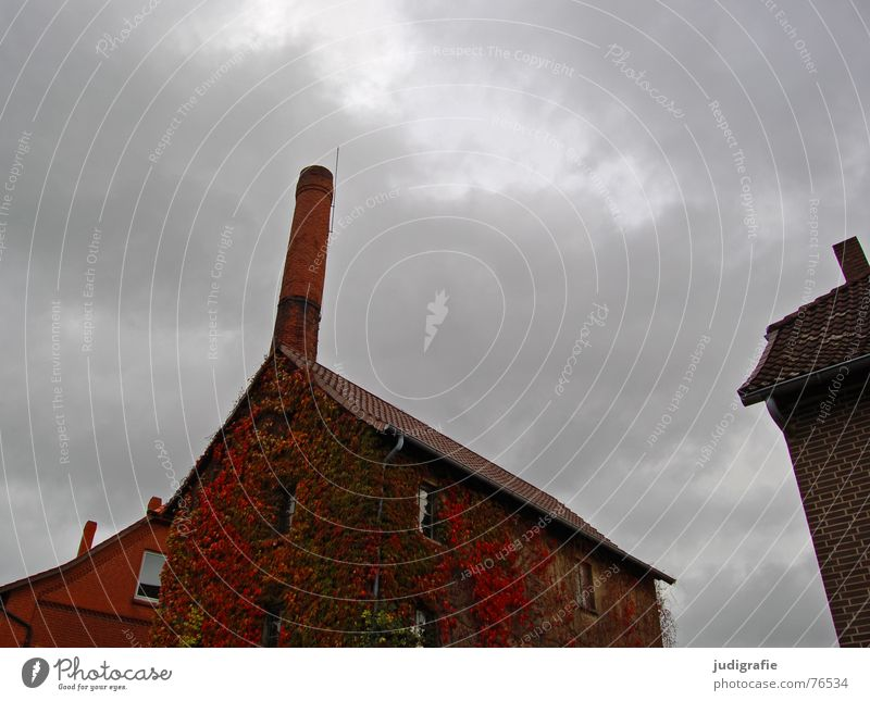 Sky Old Leaf Clouds House (Residential Structure) Autumn Window Building Vine Village Brick Grain Alcoholic drinks Chimney Overgrown Spirits