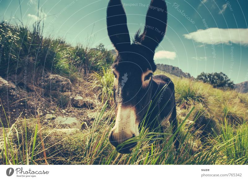 I moag donkey - I aaa Leisure and hobbies Vacation & Travel Summer Environment Nature Landscape Animal Sky Clouds Warmth Meadow Rock Pet Farm animal