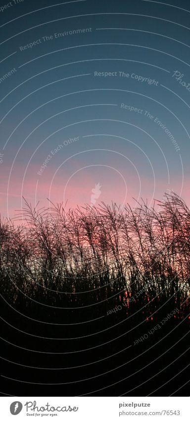 Nature Sky Plant Calm Clouds Meadow Grass Moody Field Wind Easy Dusk Progress