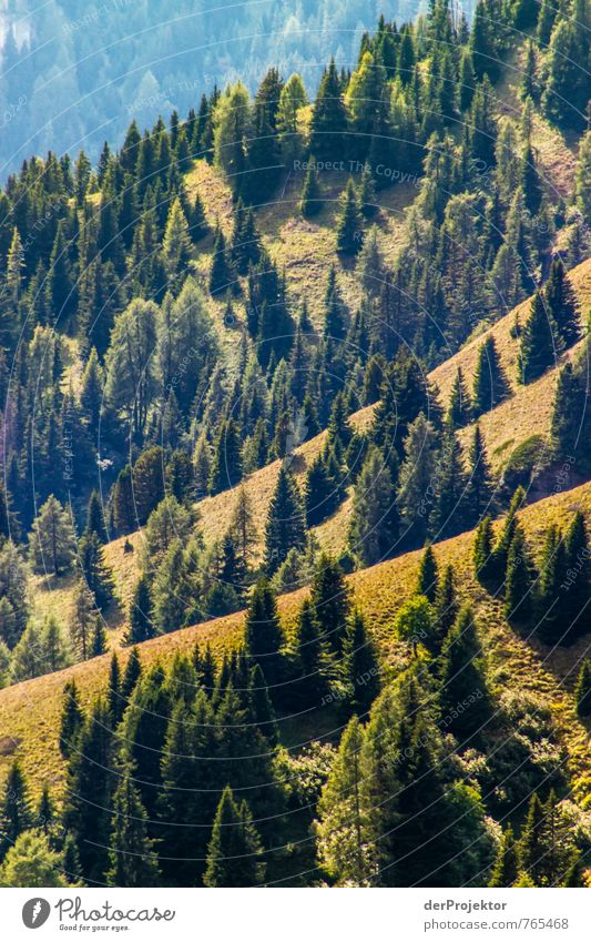 Forest - as far as the eye can see Environment Nature Landscape Plant Elements Summer Beautiful weather Tree Virgin forest Hill Rock Alps Mountain Brown Gold