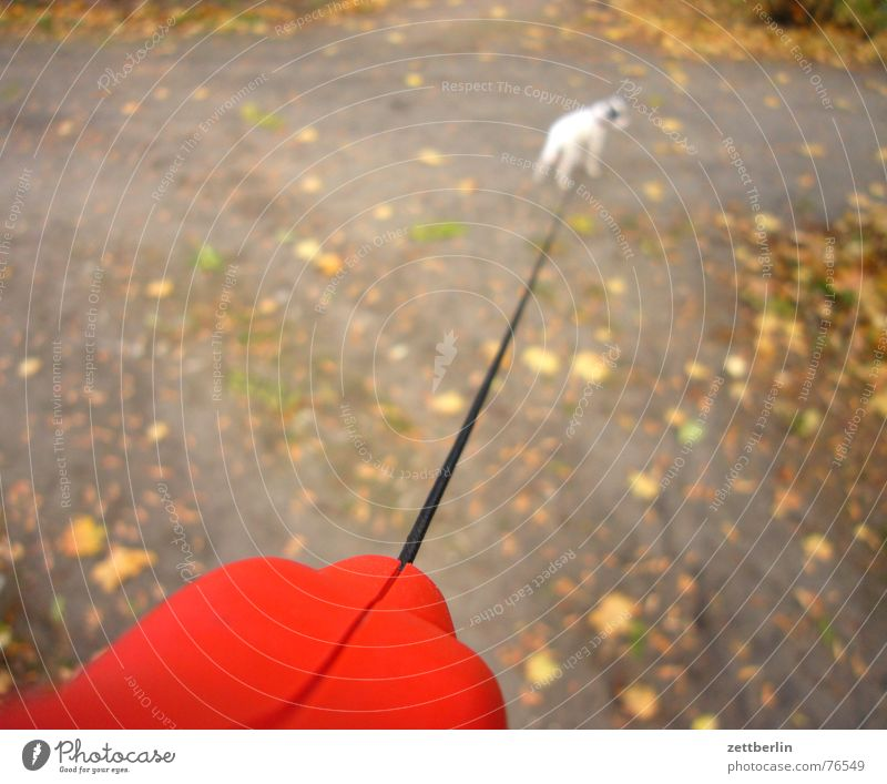 Leaf Autumn Freedom Dog Park Small Rope To go for a walk Puppy Diminutive Terrier Leashed Dog lead