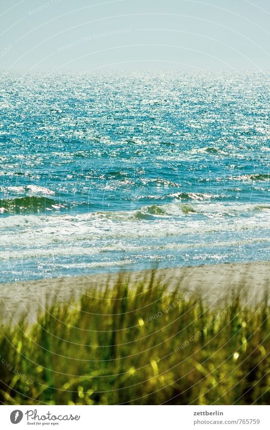 Vacation & Travel Water Ocean Relaxation Far-off places Beach Coast Grass Lake Horizon Glittering Fog Waves Wind Beginning Copy Space