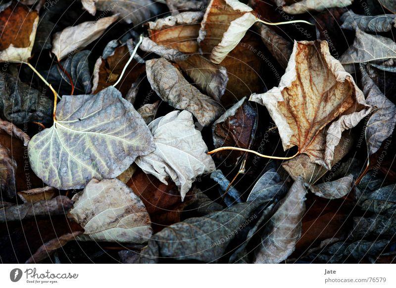 *** Leaf Autumn Near Multicoloured End leaves Bright Macro (Extreme close-up)