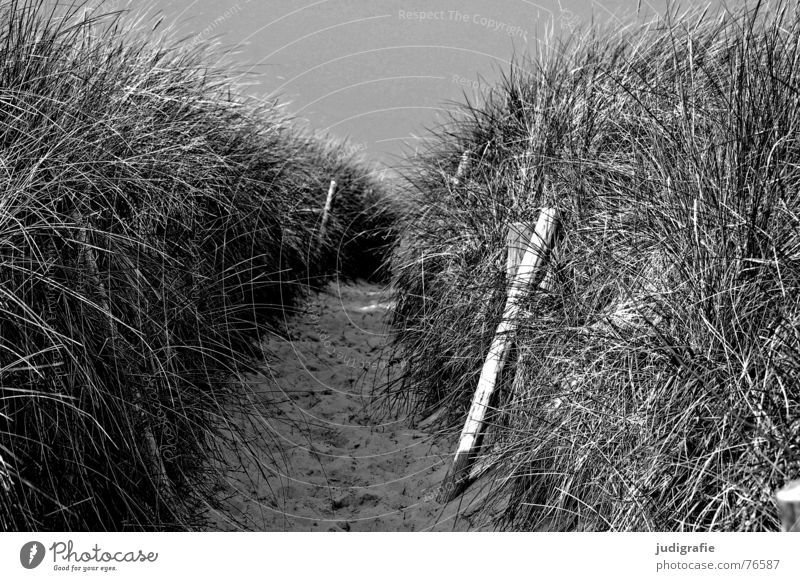And behind it is the sea. Lake Ocean Beach Grass Wood Black Vacation & Travel Western Beach fischand-darß-zingst Baltic Sea Beach dune Lanes & trails Border