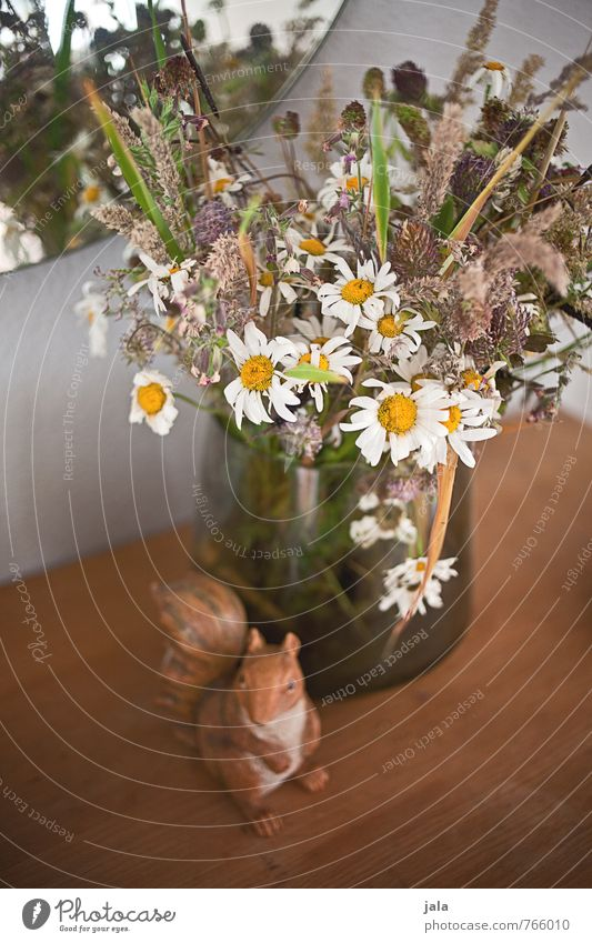 Withered Plant Flower Blossom Bouquet Vase Mirror Figure Squirrel Faded Esthetic Beautiful Wild Colour photo Interior shot Deserted Day