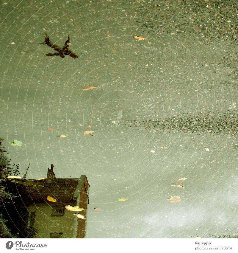 Water Leaf House (Residential Structure) Autumn Rain Wet Airplane Deep Airplane landing Puddle UFO Terror Pankow Risk of terrorism Flight path