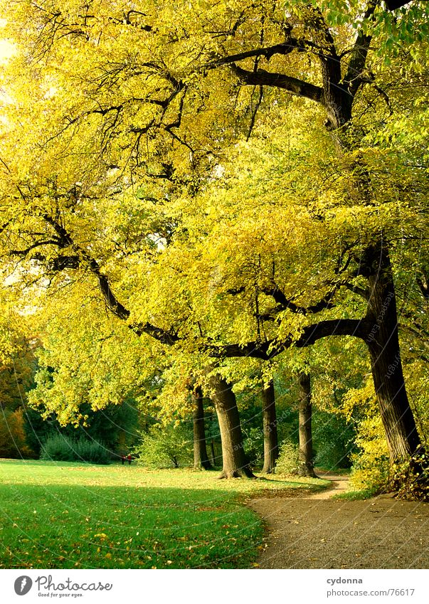 Nature Beautiful Tree Sun Green Calm Yellow Relaxation Autumn Meadow Garden Lanes & trails Park Warmth Growth To go for a walk