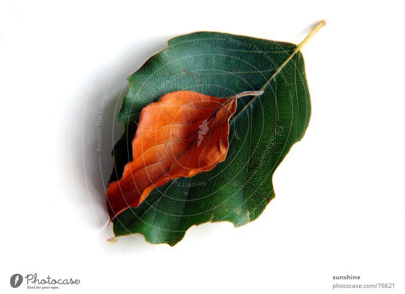 leaf in leaf Autumn Leaf Green Brown Tree 2 Nature
